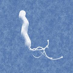 ピロリ菌検査をオススメする方